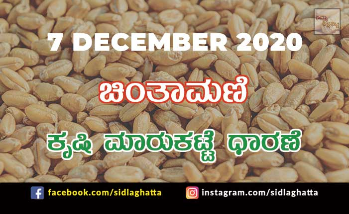 Chintamani Agriculture Market Daily Rate Farming Products Farmers Minimum Fair Price